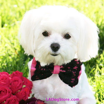 Hot Pink dog Bow Tie, Hot Pink Bow with Black Lace, Pet accessory, Dog Lovers, Dog Birthday Gift, Sexy