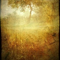 The Tapestry of Trees 8x12 Fine Art Photograph by judemcconkey