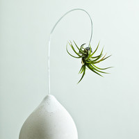 Hanging Air Plant Jellyfish with Custom Plaster Vase by REDCROWNED