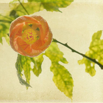 Fine Art Photography- Home Decor Wall Art with Antiqued Vintage Shabby Chic Flowers Peach Spring Green- 8 x 10