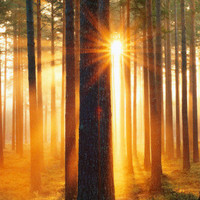 Forest Sunbeams Prints at AllPosters.com