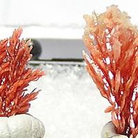 Barite included with Realgar Orange Crystals Tiny Thumbnail Mineral Specimen from Romania