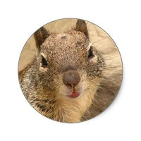 Smiling Squirrel stickers from Zazzle.com
