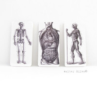 Anatomical Images Magnets  Set of 3  Mid Section  by WalterSilva