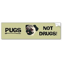 Pugs Not Drugs Bumper Sticker from Zazzle.com