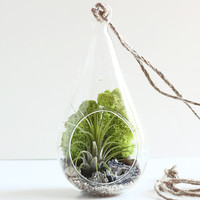 Geode and Pyrite Teardrop Air Plant Terrarium Kit with Chartreuse Moss