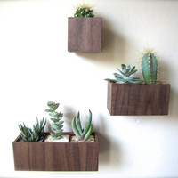 """SET of THREE Wall Planters, Hanging Planters, in WALNUT wood, includes 3""""x3""""x3"""", 5""""x3""""x3"""", and 8""""x3""""x3"""" sizes, air plants sold separately"""