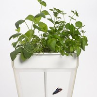 Back to the Roots 'Aquafarm' Aquaponic Indoor Garden with Self Cleaning Fish Tank - White