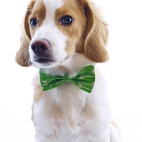 Green bow tie dog collar with arrows and hearts : Beau - small, medium and large, 45% recycled material