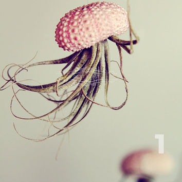 Jellyfish Air Plant and Sea Urchin