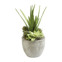 Aloe and Succulents in Pot - Ethan Allen US
