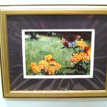 Monarch, Butterfly, Flower, Photo, Print, Framed, Wall, Decor, Picture, Nature, Winged, Insects, Gold Tone, Photography, Art, Hallway, Gift