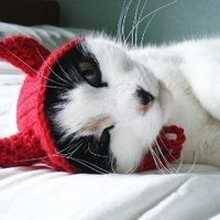 pet hat  devil by xmoonbloom on Etsy