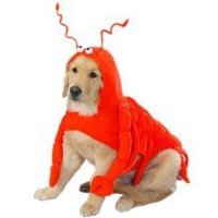 "Casual Canine Lobster Paws Dog Costume, Medium (fits lengths up to 16""), Red-Orange"