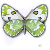 Butterfly 1 original illustration by EerinVink on Etsy