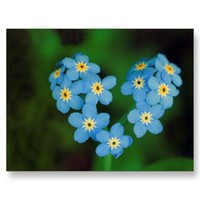 Heart Shaped Forget-me-not Flowers Post Card from Zazzle.com