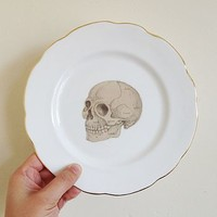 Anatomical Skull Illustration Plate Art